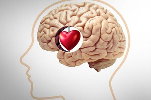 AMOR y cerebro